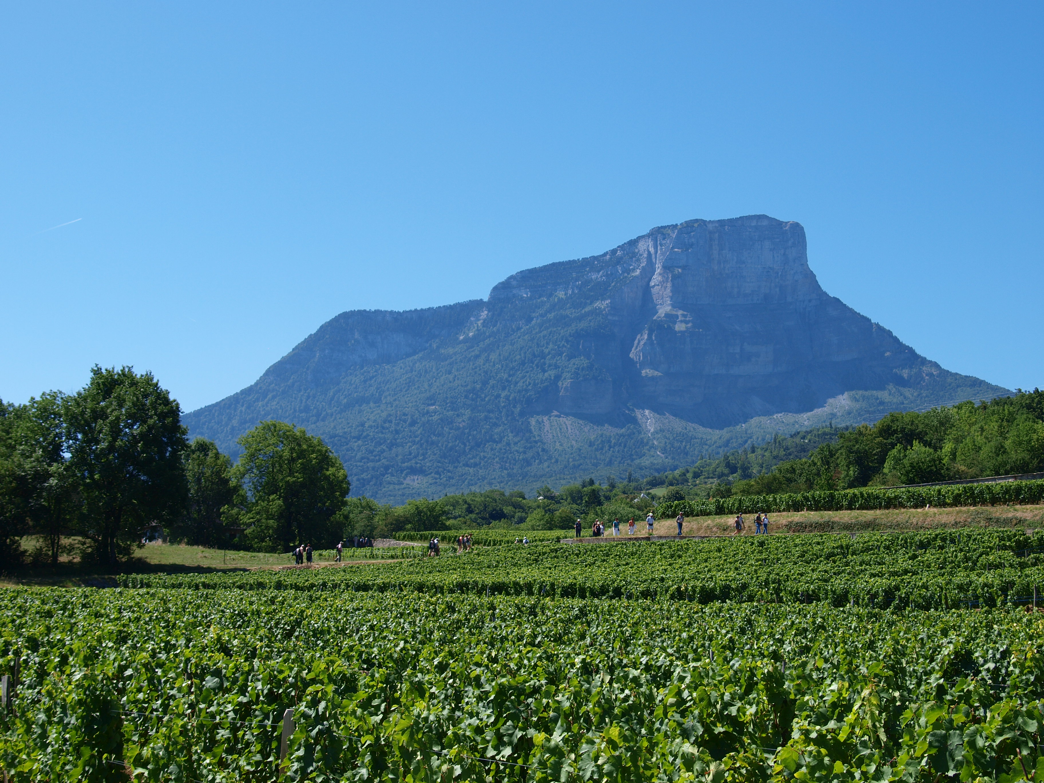 Vignobles du Mont Granier Savoie
