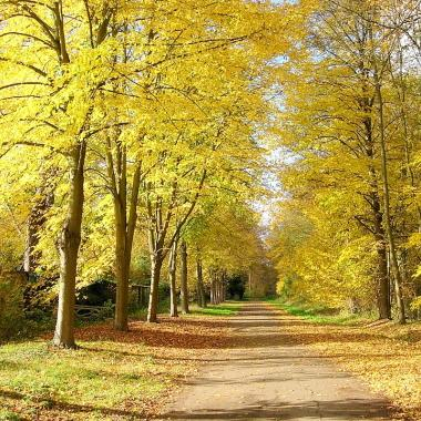 Forêt Poissy